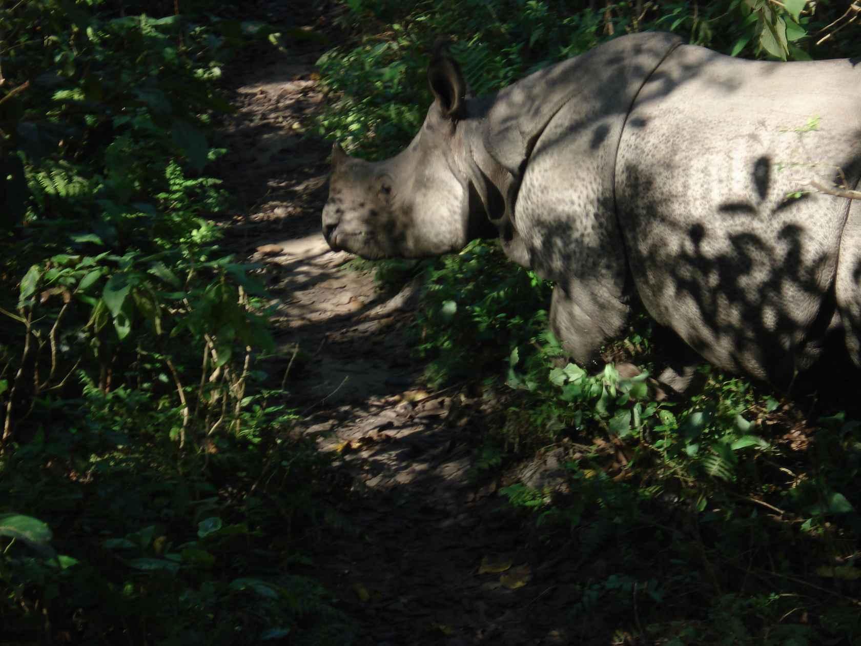 DSC01407_best-rhino