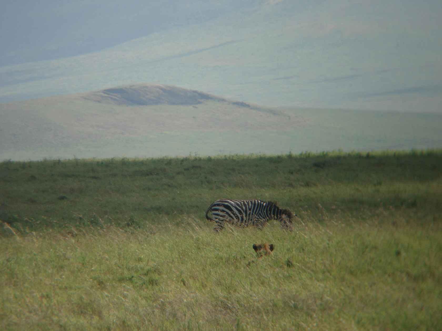 DSC00442_best_ngorongoro-stalking