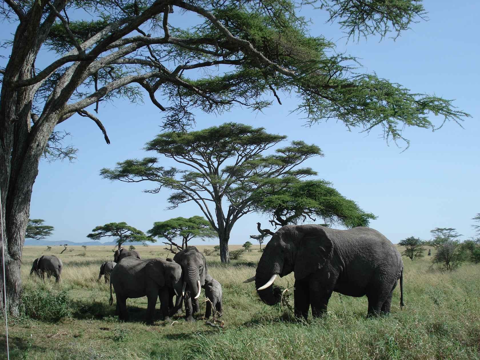 DSC00298_best-elephant-family
