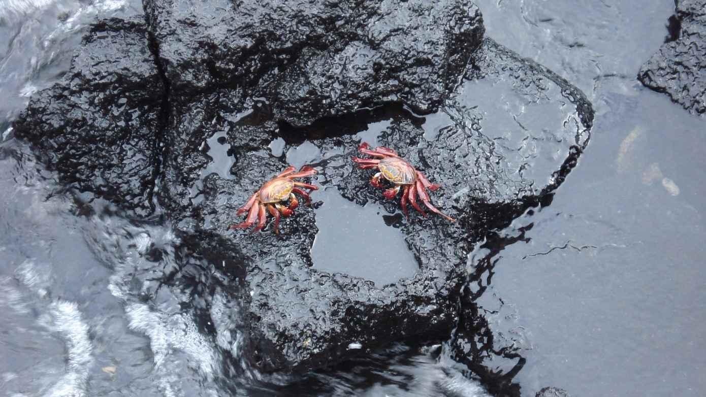 DSC00845_best-love-crab