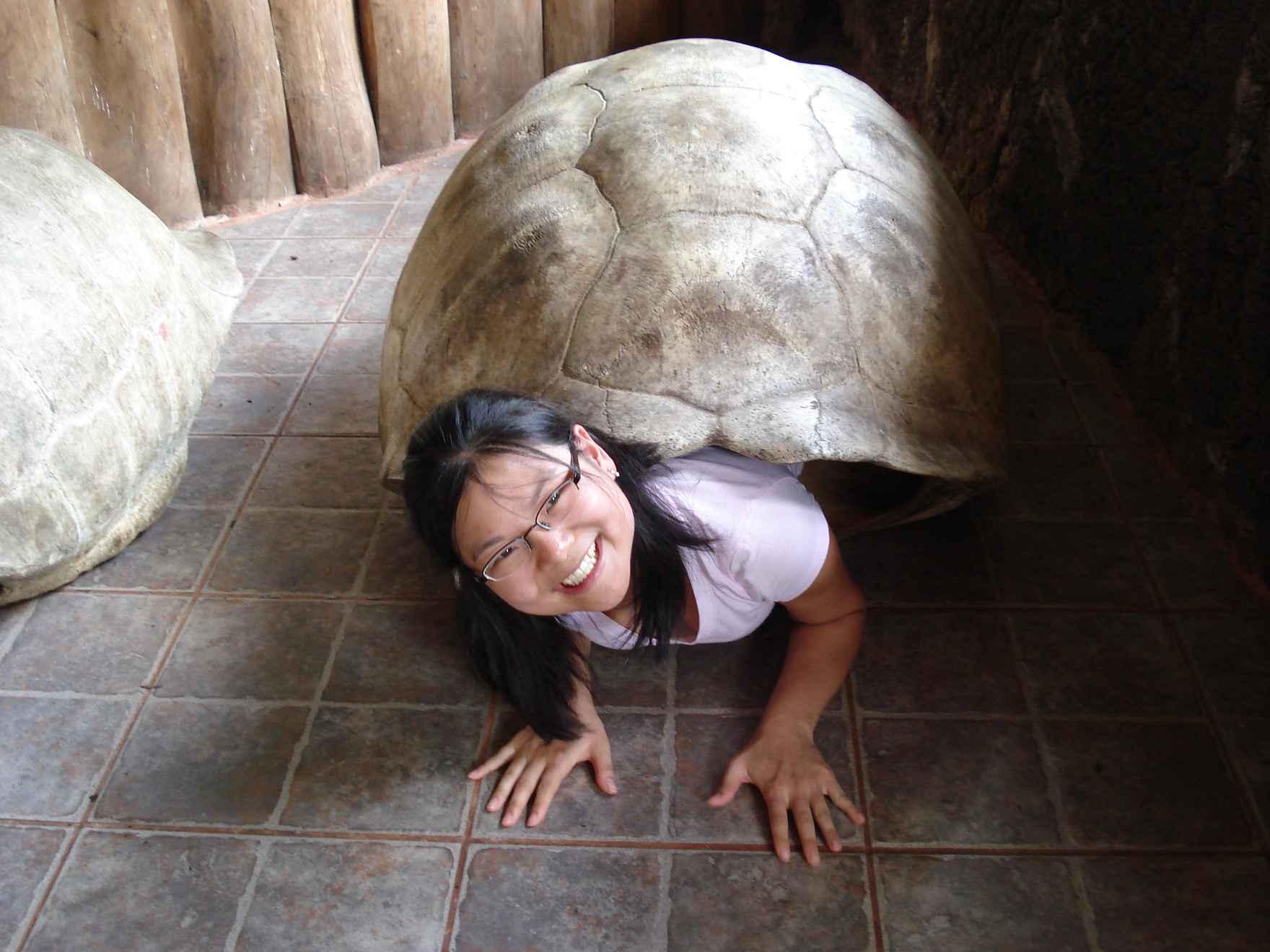 DSC00900_best-turtle-shell