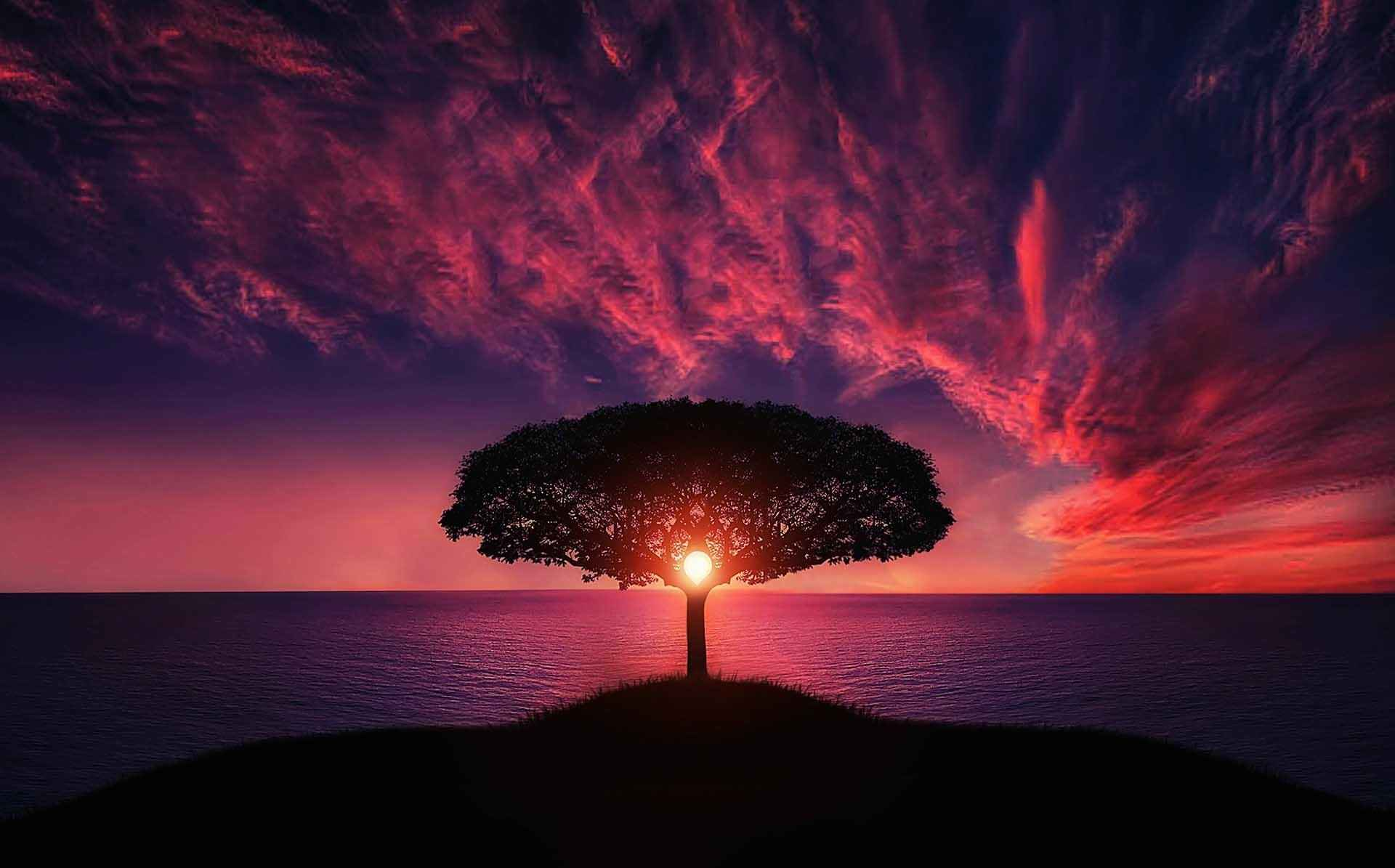 tree-of-life-rose-sunset-ocean