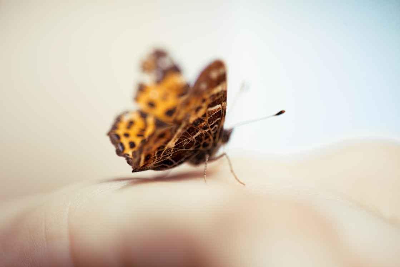 Sommerfugl sidder på hånd i sløret flot lys