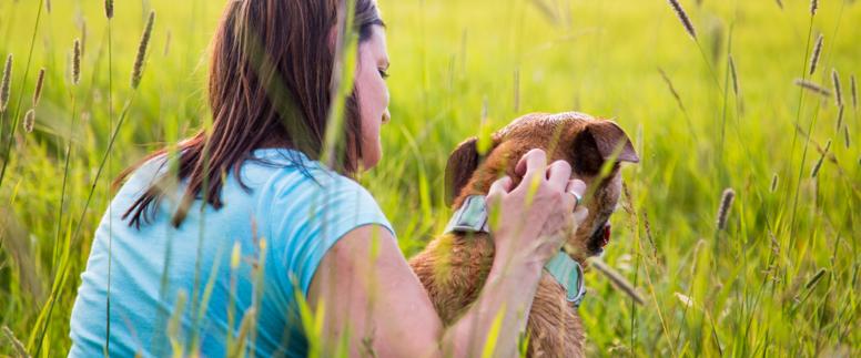 Styrk din sensitive hund