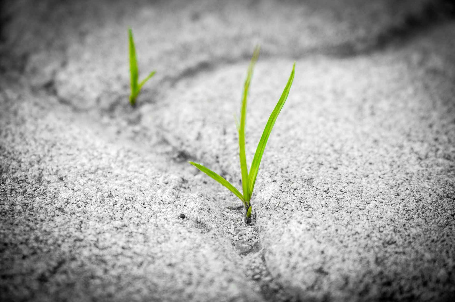grass-sprout-between-stones