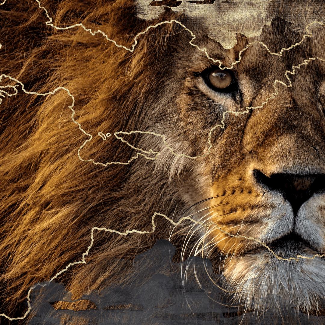 Lions Gate-min