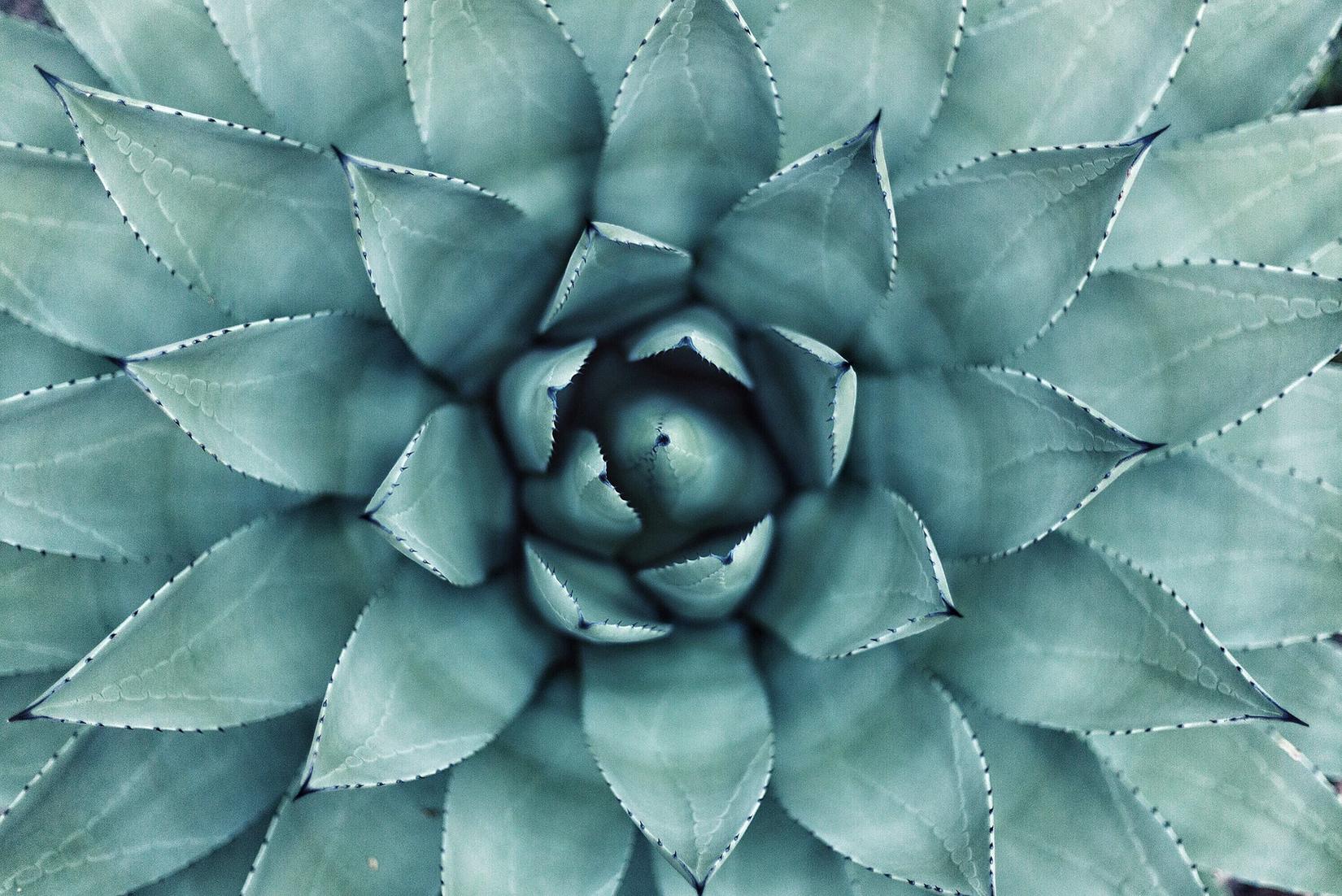 GeometryNature